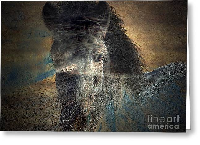 Ghost Pony Greeting Card by Irma BACKELANT GALLERIES