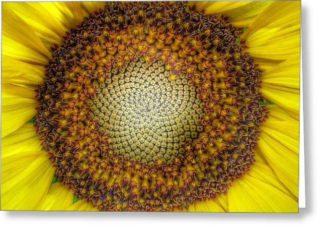 Ghost Sunflower Greeting Card