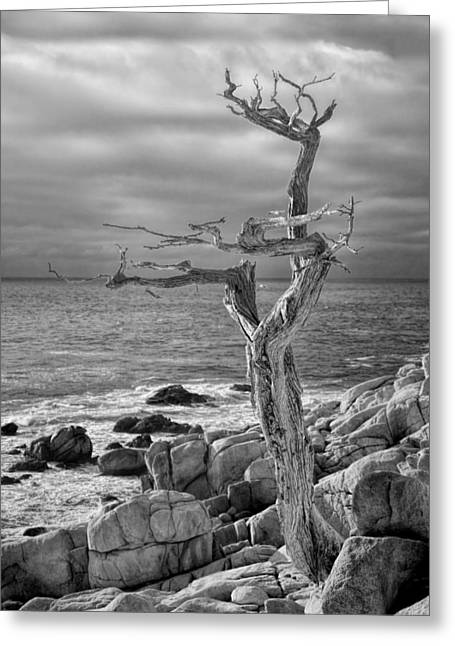 Ghost Tree 17 Mile Drive Greeting Card