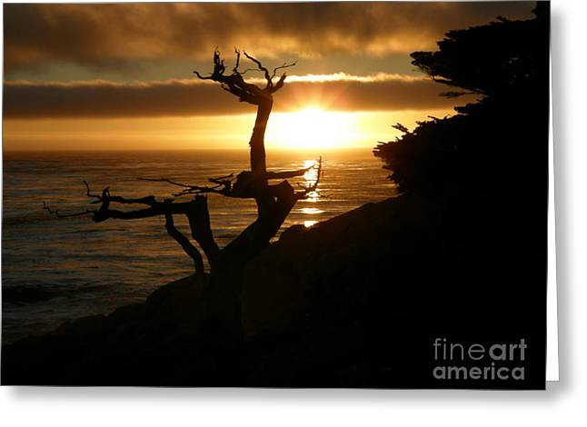 Ghost Tree At Sunset Greeting Card