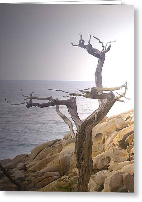 Ghost Tree Detail Greeting Card by Barbara Snyder