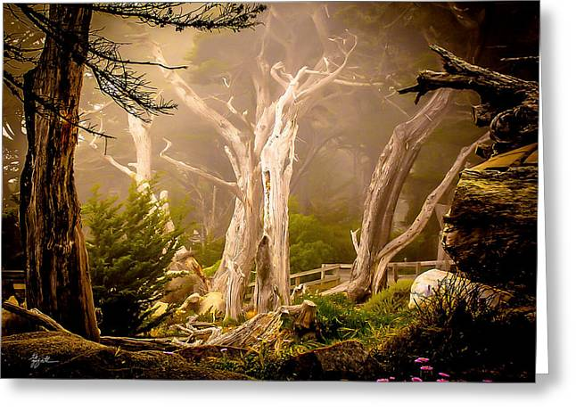 Ghost Tree Greeting Card by TK Goforth