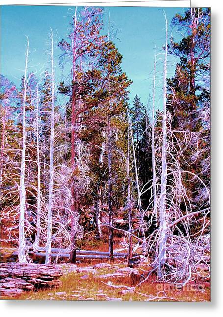 Ghost Trees Of The Yellowstone Greeting Card