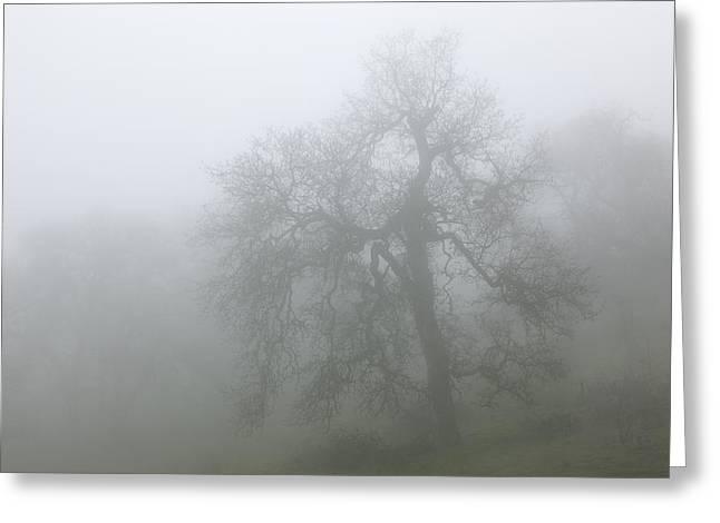 Ghostly Oak In Fog - Central California Greeting Card