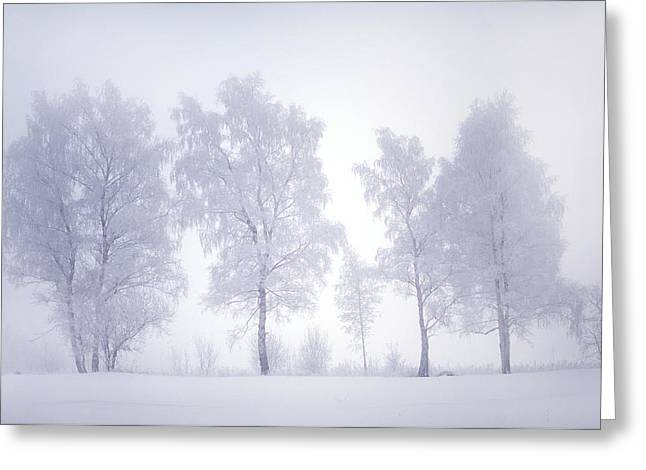 Ghostly Trees In Winter Mist Greeting Card by Jenny Rainbow