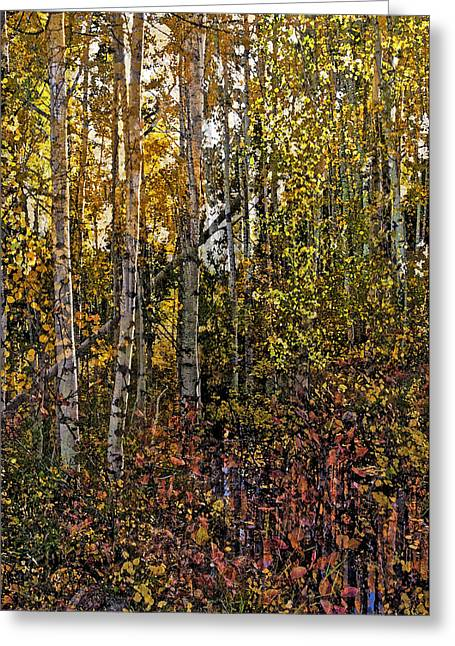 Ghosts Of A Quaking Aspen Greeting Card by Eric Rundle