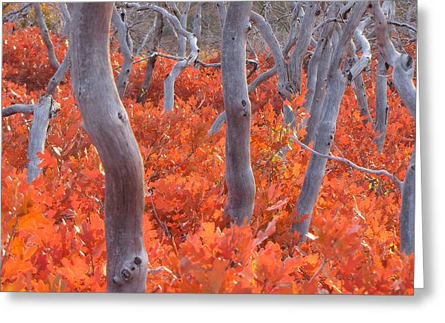 Ghosts Of Seasons Past Greeting Card by Feva  Fotos