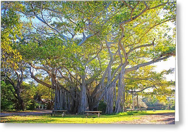 Giant Banyan Tree Greeting Card by Iryna Goodall