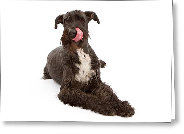 Giant Black Schnauzer Dog Licking Lips Greeting Card