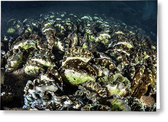 Giant Clam Farm Greeting Card