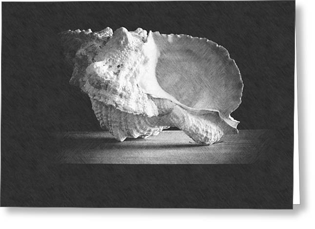 Giant Frog Shell Greeting Card by Frank Wilson