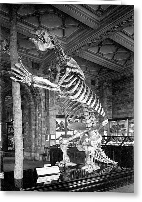 Giant Ground Sloth Greeting Card by Natural History Museum, London