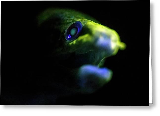 Giant Moray Eel Fluorescing Greeting Card