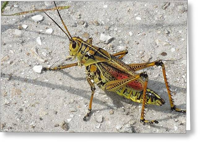 Greeting Card featuring the photograph Giant Orange Grasshopper by Ron Davidson