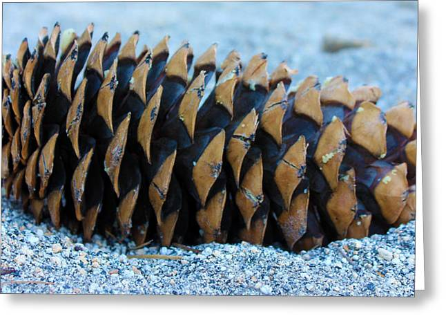 Giant Pinecone Greeting Card