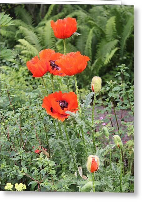 Greeting Card featuring the photograph Giant Poppies by David Grant