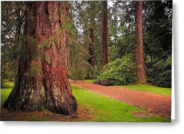 Giant Sequoia Or Redwood. Benmore Botanical Garden. Scotland Greeting Card by Jenny Rainbow