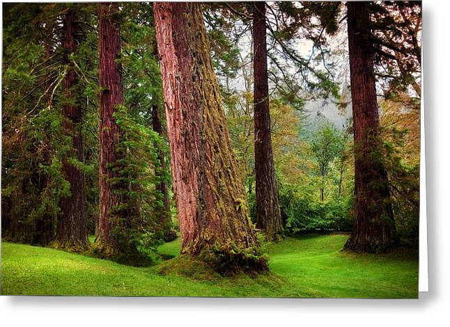 Giant Sequoias. Benmore Botanical Garden. Scotland Greeting Card by Jenny Rainbow