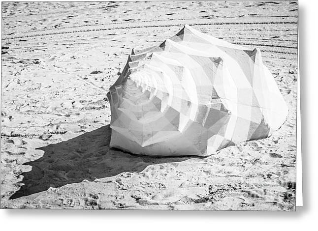 Giant Shell Sculpture 2  - Key West - Black And White Greeting Card