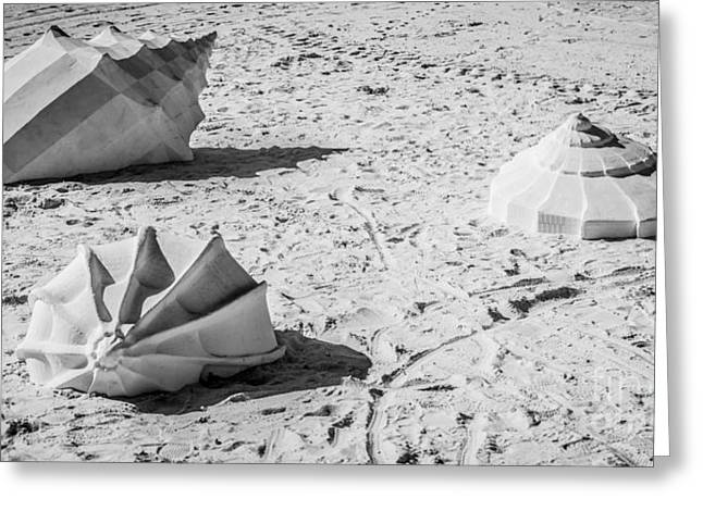 Giant Shell Sculpture - Key West - Black And White Greeting Card