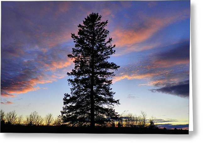 Giant Spruce Tree Sunset Greeting Card by Gene Cyr