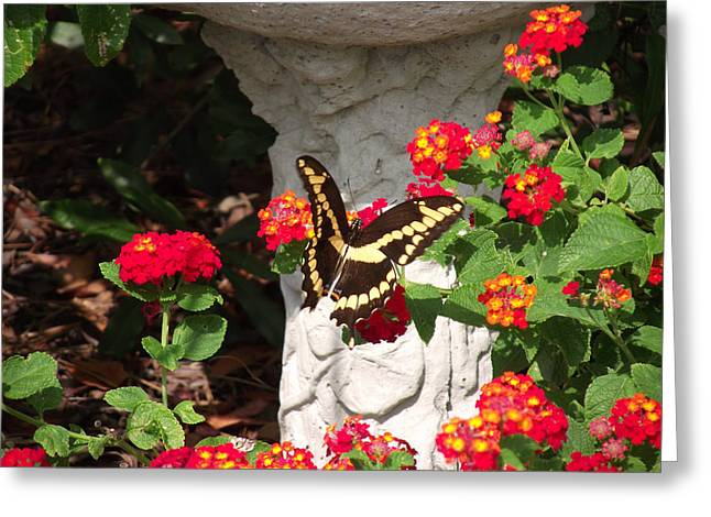 Greeting Card featuring the photograph Giant Swallowtail On Lantana by Jayne Wilson
