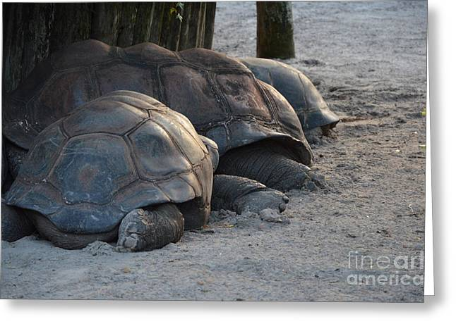 Greeting Card featuring the photograph Giant Tortise by Robert Meanor