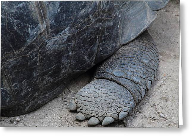 Giant Tortoise Greeting Card by Debbie Cundy