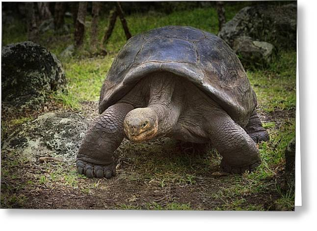 Giant Tortoise Greeting Card by Kim Andelkovic
