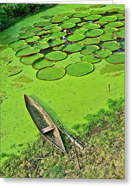 Giant Water Lilies And A Dugout Canoe In Amazon Jungle-peru Greeting Card