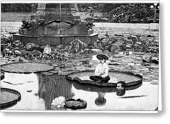 Giant Water Lilies Greeting Card by Science Photo Library