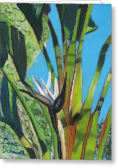 Giant White Bird Of Paradise Greeting Card