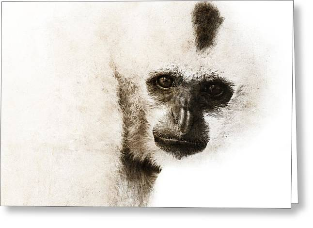 Crested Gibbon #1 Greeting Card