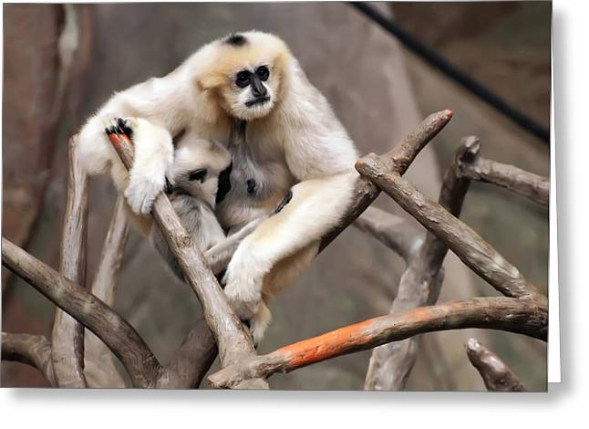 Gibbon Nursing Its Baby Greeting Card by Chris Flees