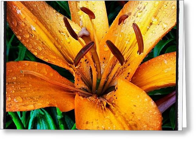 Gift From #mom #orange #lily #rainyday Greeting Card