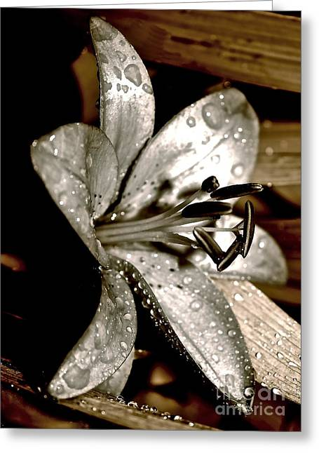 Greeting Card featuring the photograph Gilded Lilies 3 by Linda Bianic