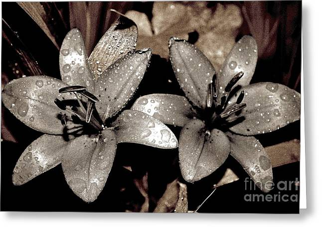 Greeting Card featuring the photograph Gilded Lilies by Linda Bianic