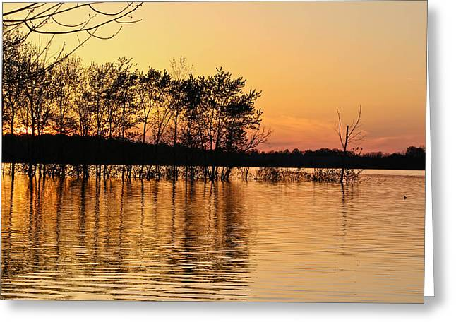 Gilded Sunset Greeting Card