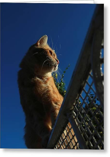 Ginger Cat Sat On Garden Gate Greeting Card