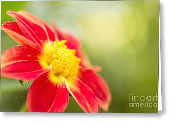 Ginger Greeting Card by Beve Brown-Clark Photography