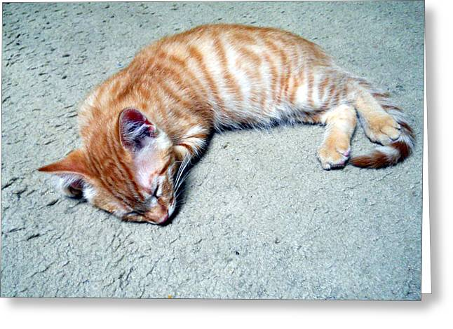 Ginger Sleeps Greeting Card