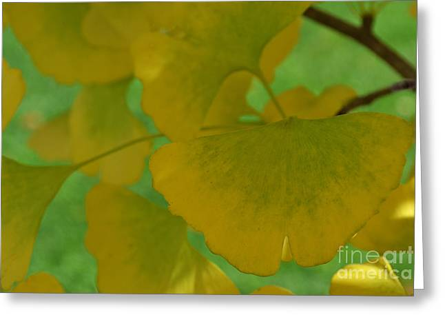 Ginkgo Leaves Abstract Greeting Card