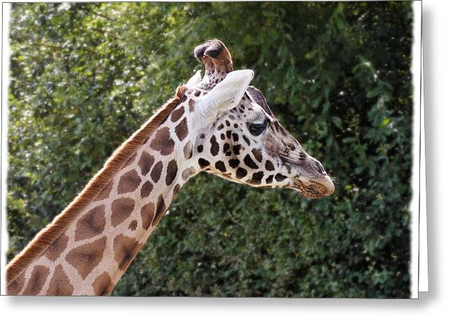 Greeting Card featuring the digital art Giraffe 01 by Paul Gulliver