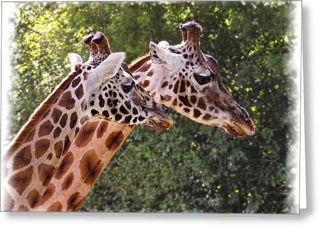 Giraffe 03 Greeting Card