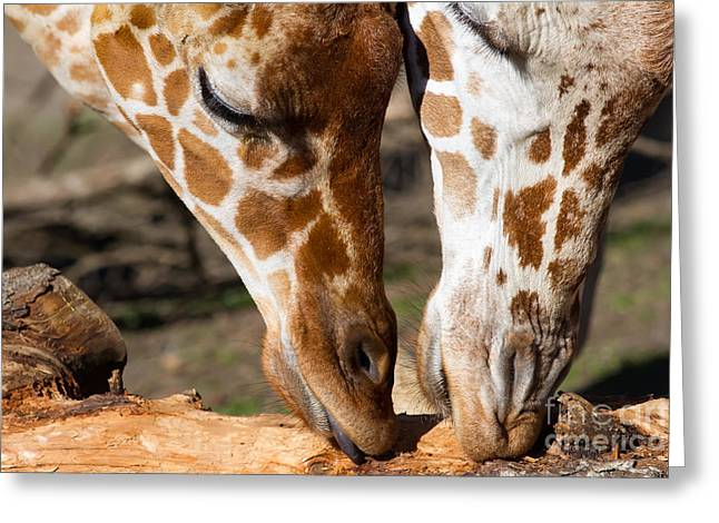Giraffe 7d8917 Greeting Card by Wingsdomain Art and Photography
