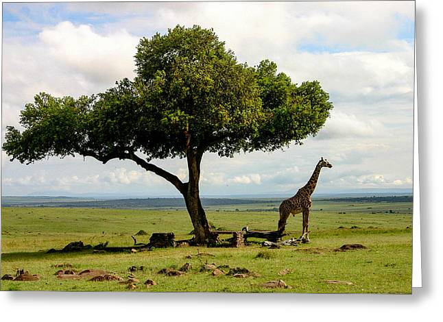 Giraffe And The Lonely Tree  Greeting Card