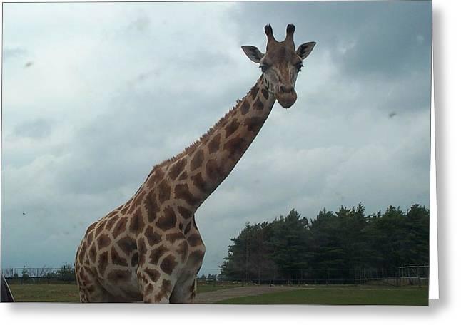 Greeting Card featuring the photograph Giraffe by Barbara McDevitt