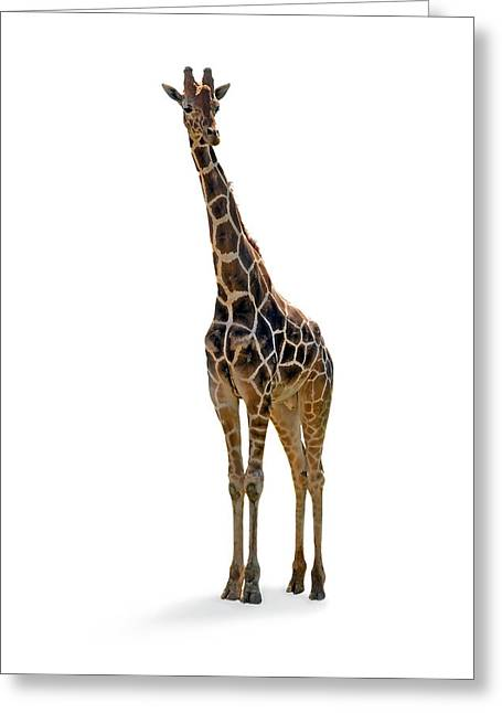 Greeting Card featuring the photograph Giraffe by Charles Beeler