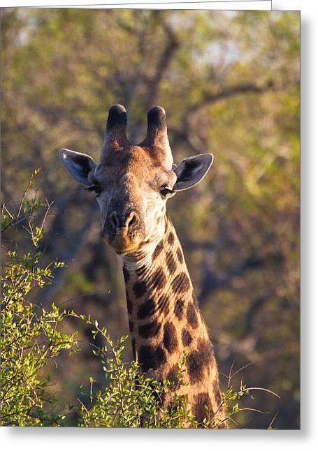 Giraffe Greeting Card by Craig Brown