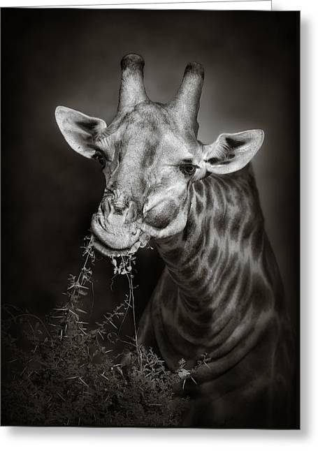 Giraffe Eating Greeting Card by Johan Swanepoel